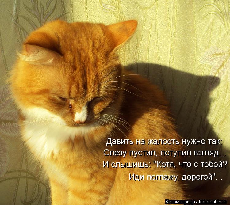 kotomatritsa_xg